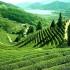 http://www.funonthenet.in/images/pics3/top_ten_scenic_locations_in_india/Enchanting-Darjeeling-tea.jpg